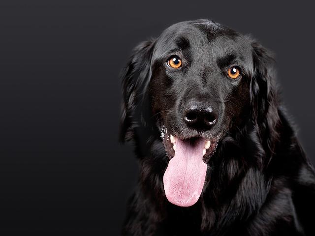 Chó có thể nhìn trong bóng tối không?