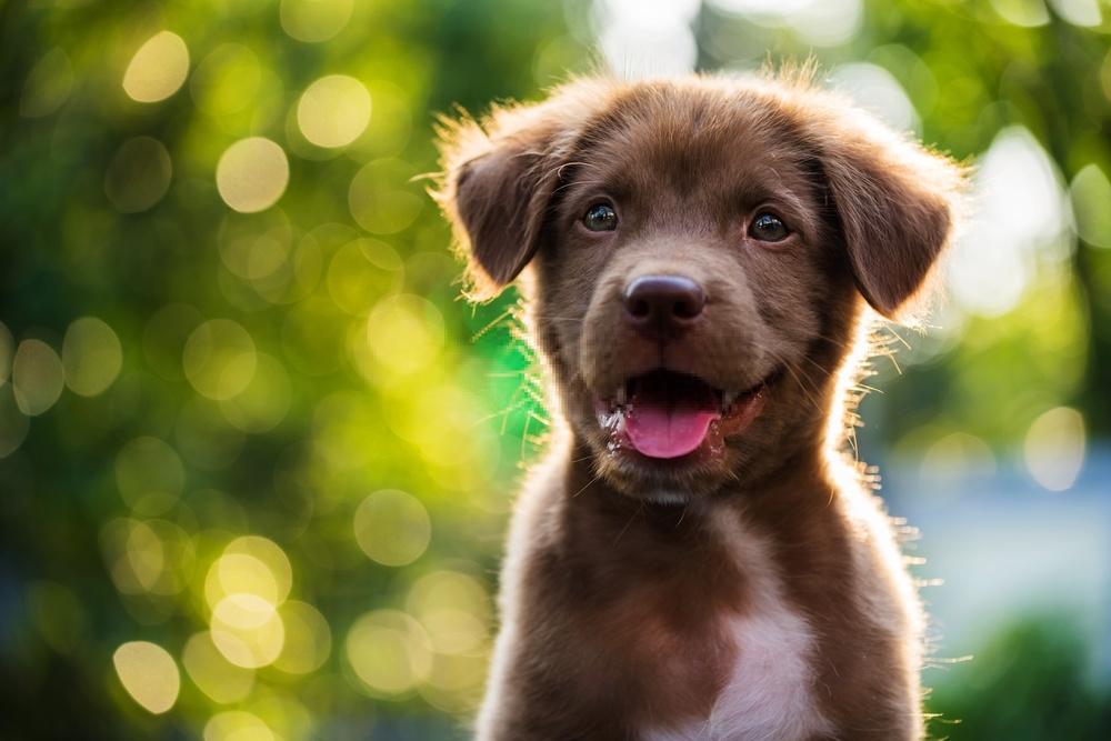 Nuôi dạy thú cưng - Chó có thể ăn bơ không? Nó là xấu hay tốt cho họ?